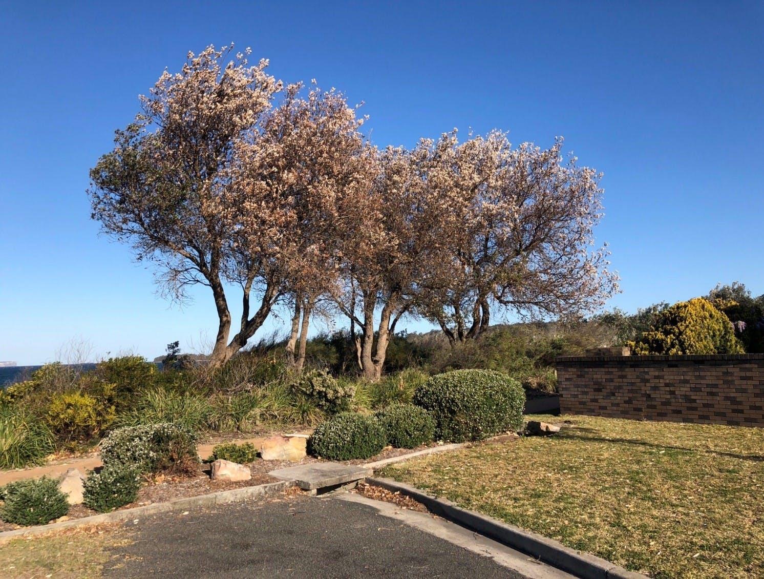 Vegetation Vandalism Example - Nov 2018